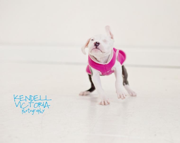 tiny puppy for adoption MN