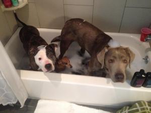 3 dogs in bathtub