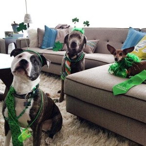 dogs in costumes st. patricks's day