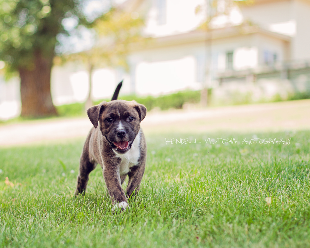 Rescue Dogs Available In Minnesota