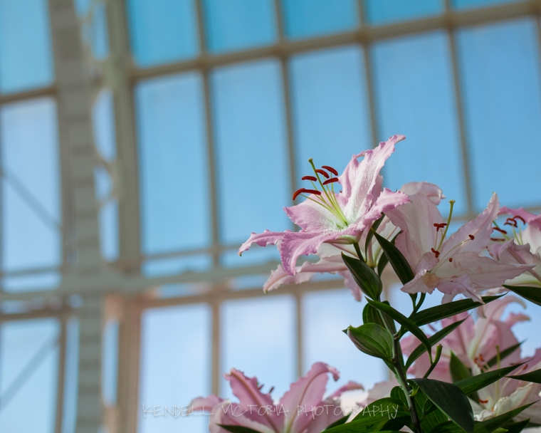 st. paul, como park, conservatory, what to do on a cold day in the twin cities, mpls