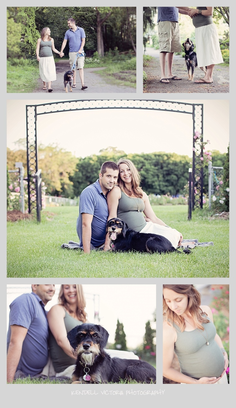 minneapolis maternity photography, dog and maternity, twin cities
