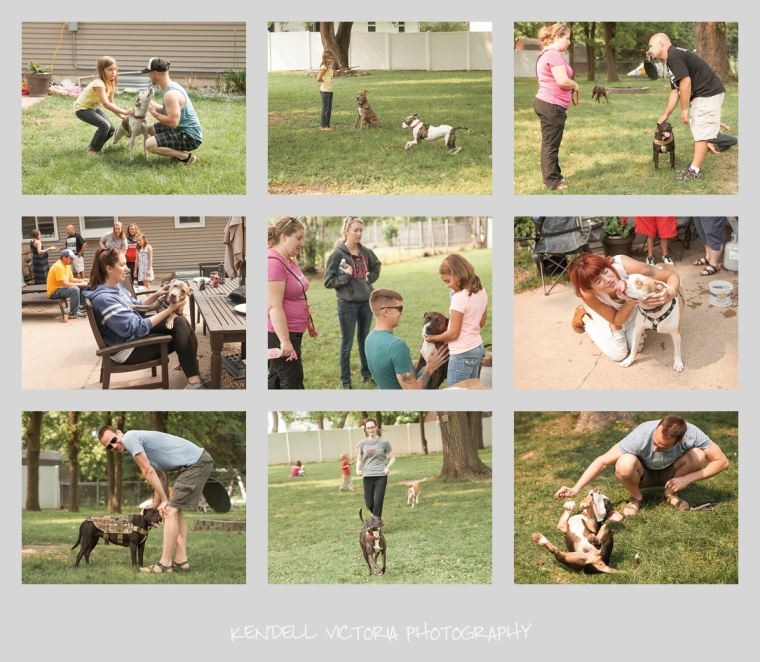 foster dog reunion, secondhand hounds, minnesota dog photography